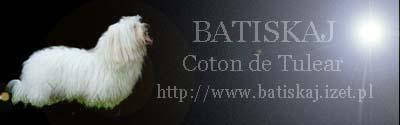 Coton de Tulear - BATISKAJ