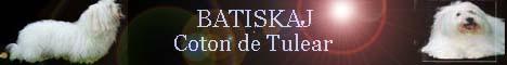 BATISKAJ=COTON DE TULEAR